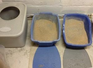 SwheatScoop