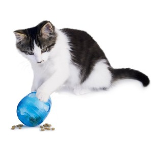 Egg-Cersizer_Meal_Top_Holiday_Cat_Gift