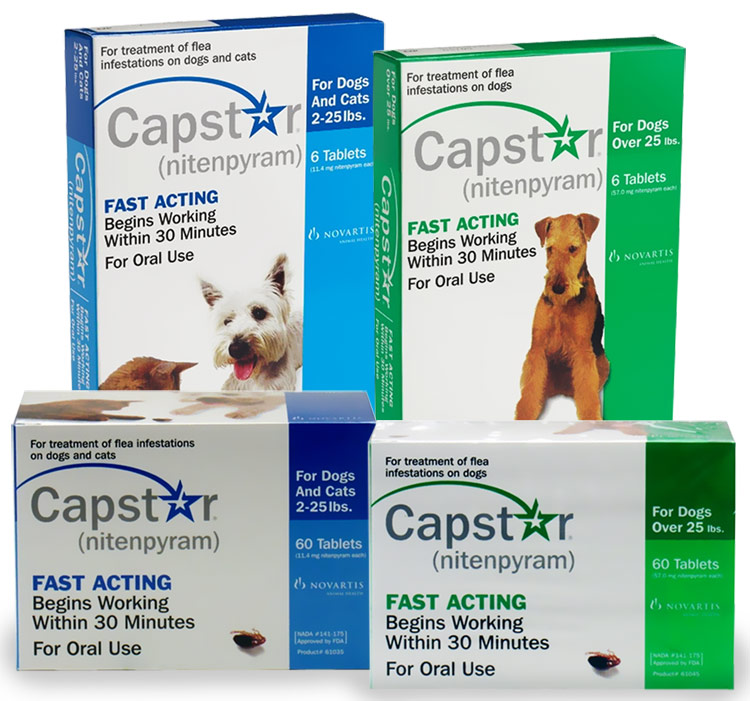 Picking A Flea Tick Medication For Your Pet Dr Justine Lee Dr