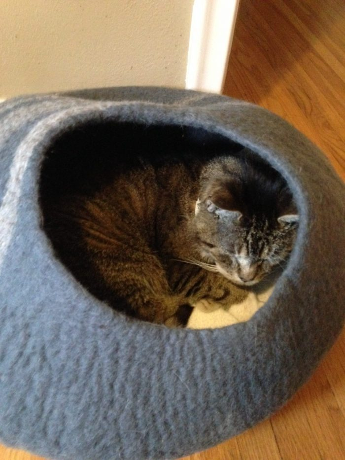 My Cat Has Squamous Cell Carcinoma Dr Justine Lee America S Veterinarian Dr Justine Lee