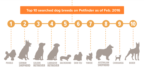 Breeds of dog searched for
