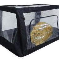 Do you need an oxygen cage for your pet at home? | Dr. Justine Lee