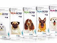 New flea/tick medication by Merck just approved: Bravecto | Dr. Justine Lee