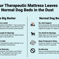 Veterinary review of the orthopedic dog bed Big Barker