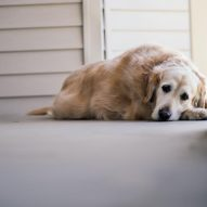 Do I have to bring my dog to the emergency vet?   Dr. Justine Lee