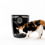 Should you get an automatic pet feeder for your dog or cat?