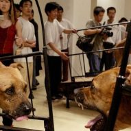 Guggenheim Animal Abuse art exhibit | Dr. Justine Lee, DACVECC, DABT, Board-Certified Veterinary Specialist