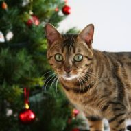 Holiday Dangers that are Poisonous to Pets | Dr. Justine Lee