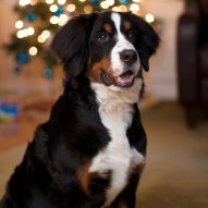 Holiday dangers poisonous to pets | Dr. Justine Lee