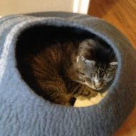 My cat has squamous cell carcinoma | Dr. Justine Lee, DACVECC, DABT, Board-Certified Veterinary Specialist