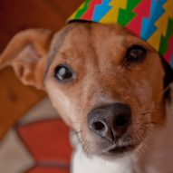 New Year's Resolutions for Your Pet   Dr. Justine Lee