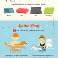 How to keep your dog safe around the pool this summer!   Dr. Justine Lee