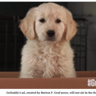Worst Super Bowl GoDaddy puppy ad ever | Dr. Justine Lee