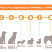 Great infographic on dogs in search of forever homes! | Dr. Justine Lee
