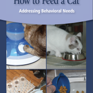 How to feed your cat | Dr. Justine Lee, DVM, DACVECC, DABT, Board-Certified Veterinary Specialist