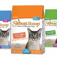 SwheatScoop: The Cat's Meow: Excited to join the feline expert team!