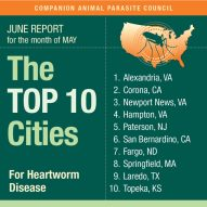 Top 10 cities affected by heartworm disease in dogs!
