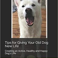 How to keep your geriatric dog more comfortable