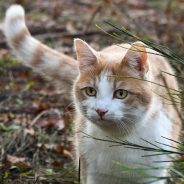 Flea and tick poisoning in cats | Dr. Justine Lee, DVM, DACVECC, DABT, Board-certified Veterinary Specialist
