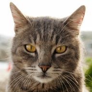 Why do cats drool? | Dr. Justine Lee