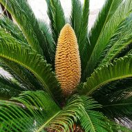 My dog just ate a sago palm | Dr. Justine Lee, DACVECC, DABT, Board-certified Veterinary Specialist