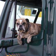Heat stroke in dogs   Dr. Justine Lee, DACVECC, DABT, Board-certified veterinary specialist