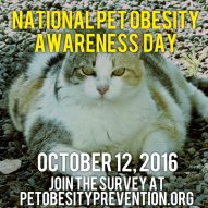 Pet Obesity Awareness Day | Dr. Justine Lee