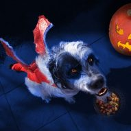 Top 5 Halloween Safety Tips for Vets and Pets