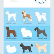 Why do dogs shed? | Dr. Justine Lee, America's Veterinarian