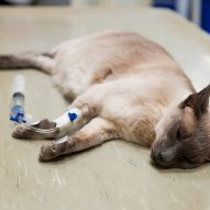 Sick cat tests positive for COVID-19 in Minnesota